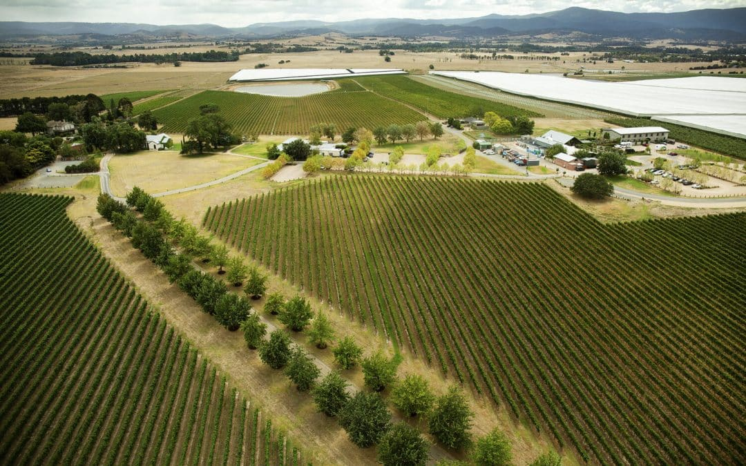 Yarra Valley Tours in Melbourne