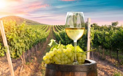 Explore The Yarra Valley Wine Tours In Melbourne