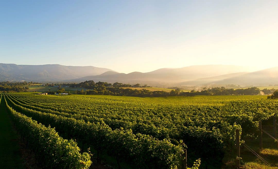 Explore the Beauty of Yarra Valley Winery In the Best Season